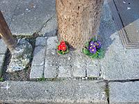 flowers growing from the base of a light post